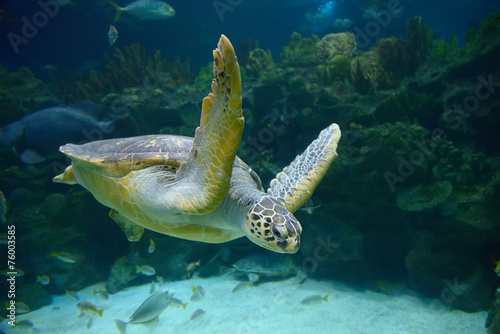 Papiers peints Tortue Sea turtle