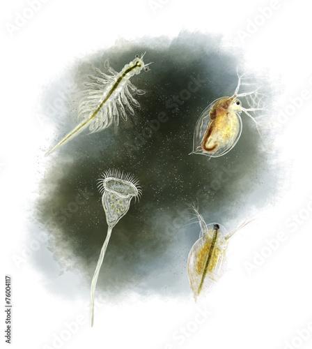Common pond organisms - 76004117