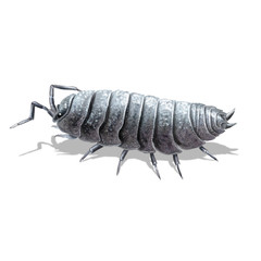 the pill-bug