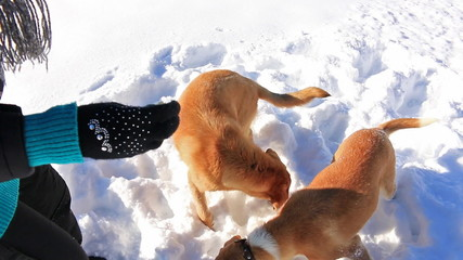 Happy woman plays with dogs in snow