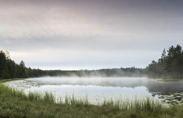 Morning in pond
