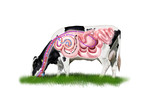 Cow digestive system