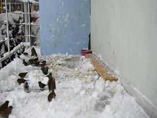 kış mevsimi aç kuşlara yem vermek