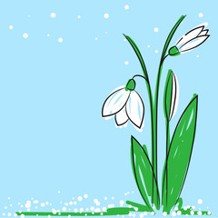 hand drawn snowdrop on a light blue background