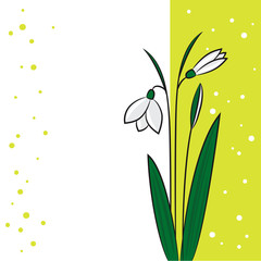 snowdrop on a light green background