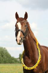 Portrait of chestnut horse with dandelion circlet