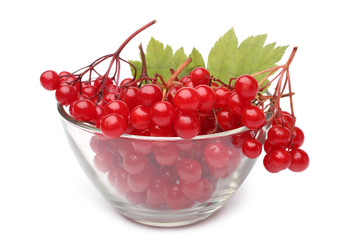 Red berries of viburnum in glass bowl