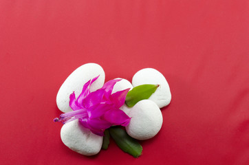 Beautiful pink flower on white pebbles