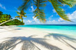Rest in Paradise - Malediven - Palme, Palmenschatten, Strand