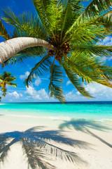 Rest in Paradise - Malediven - Palme, Palmenschatten, Himmel und