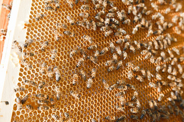 Portrait of bees in the beehive