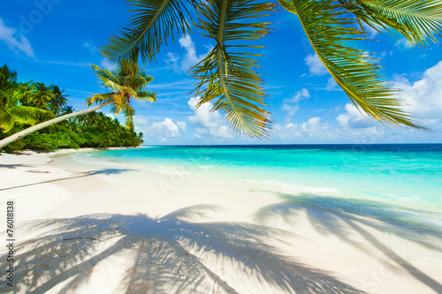 Rest in Paradise - Malediven - Palme, Palmenschatten, Strand - 76018138
