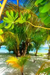 Rest in Paradise - Malediven - Palmenstrand