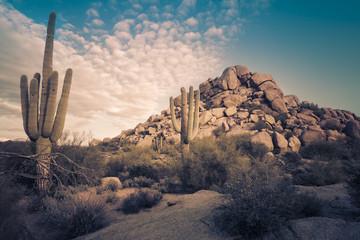 Wild desert landscape