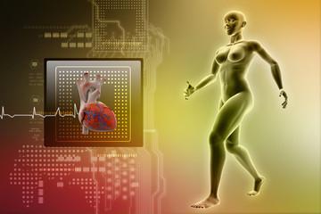 female human body and heart