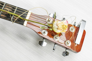 Wilted rose on acoustic guitar head