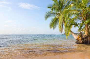 Boca del Drago beach, Panama