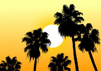 Oasis desert sun