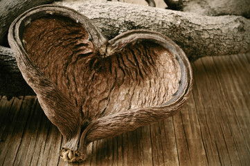 heart-shaped nut shell and logs