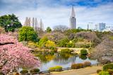 Shinjuku Gyoen Park, Tokyo, Japan in the Springtime
