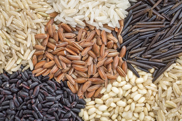 rice grain abstract