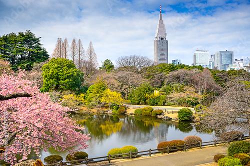 Foto op Plexiglas Tokyo Shinjuku Gyoen Park, Tokyo, Japan in the Springtime