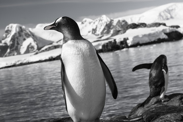 two penguins resting