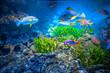 Leinwanddruck Bild - Singapore aquarium