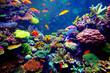 Singapore aquarium - 76028968