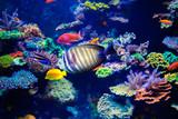 Colorful aquarium