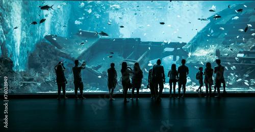 Large Aquarium in Singapore - 76028949