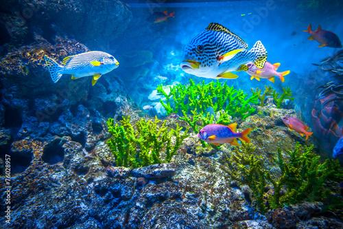 Leinwanddruck Bild Singapore aquarium