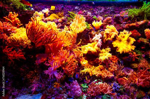 Singapore aquarium - 76028964