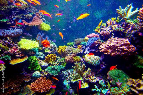 Fotobehang Duiken Singapore aquarium