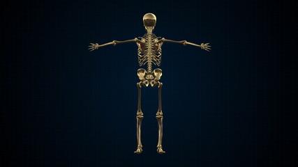 3D Animation of Human Skeleton Gold Loopable. Alpha matte