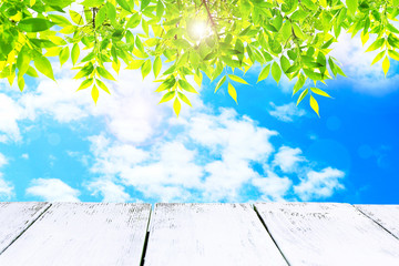 Wooden board on cloudy sky with green tree branches background