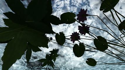 flowers  under water