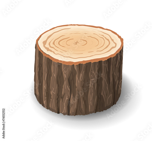 Cross section of tree stump, vector illustration - 76032152
