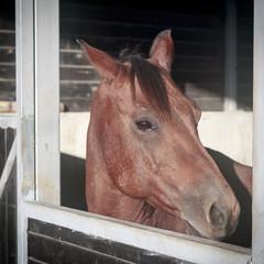 One beauty brown horse portrait