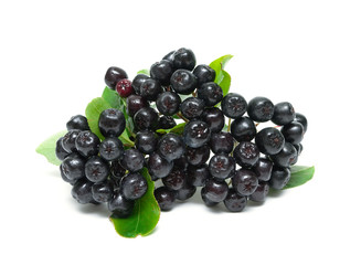 bunch of ripe berries of Aronia isolated on a white background