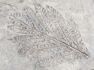 ancient leaf