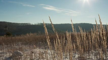 Golden grass on winter field