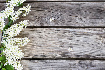 Bird cherry branch on a wooden background