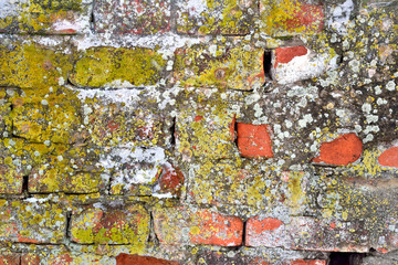 Old brick wall covered with mold and moss background