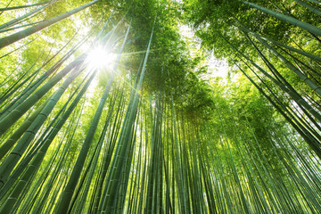 Bamboo forest Kyoto - Japan