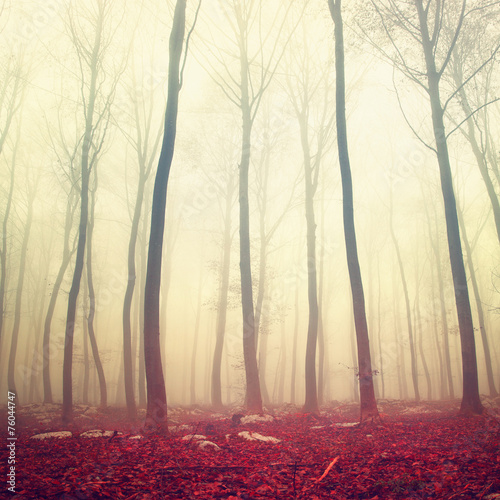 Fantasy red color forest