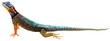A lizard - 76045998