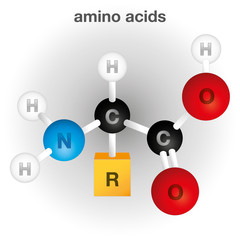 Structure and composition chemical element, amino acid
