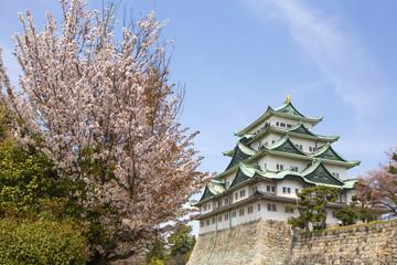 Nagoya Castle in Japan during cherry blossom season in spring.