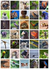 Animals od the world